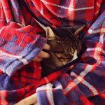 着る毛布に包まれる猫